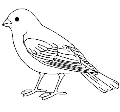coloring page of house sparrow cute sparrow coloring sheet for kidz coloring point