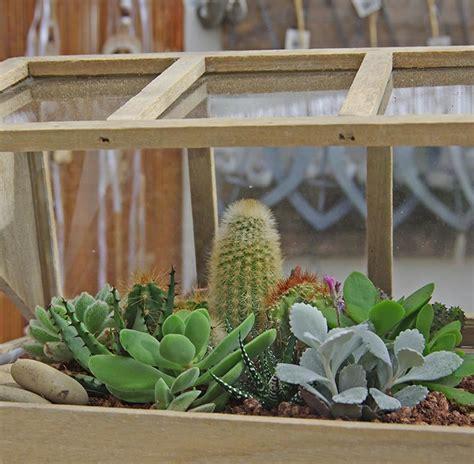 foto piante grasse da appartamento piante da appartamento foto e nomi piante grasse da casa
