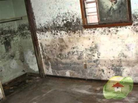 mold in bathroom health symptoms 37 best ideas about mold exposure on energy