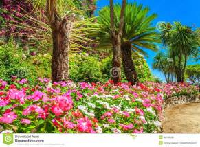 beautiful flowers plants and trees rufolo garden ravello italy europe stock photo image 49158608