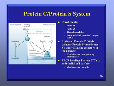 c protein coagulation review of the coagulation system