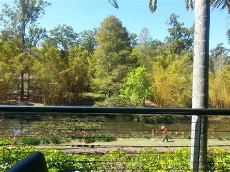 Mt Coot Tha Botanical Gardens Cafe Botanical Cafe And Function Centre Mt Coot Tha Brisbane