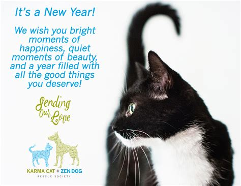 the year of the cat new year happy new year karma cat zen rescue society