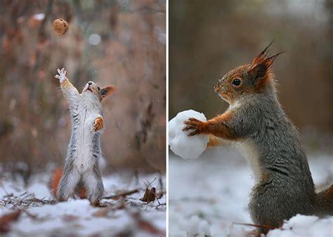 Valentines Decoration Ideas Cutest Squirrel Photos Taken By Vadim Trunov Incredible