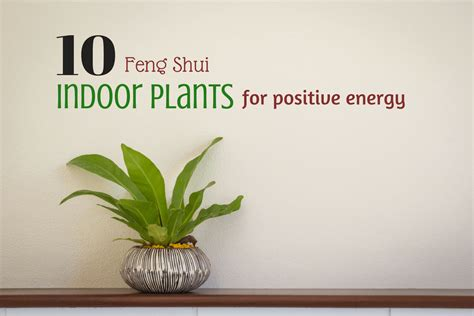 what is the feng shui of plants in the bedroom 10 feng shui positive energy indoor plants lucky plants