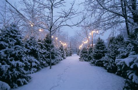 guide to christmas in minneapolis and st paul