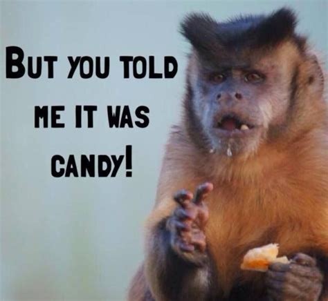 Funny Monkey Meme - monkey meme funny pictures quotes memes jokes