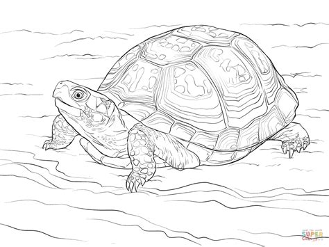 coloring pages snapping turtle box turtle coloring page