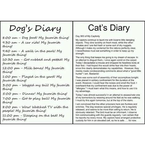 cat vs diary diary vs cat diary