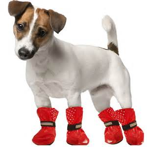 Bath And Shower Stores doggy wellies pets dog accessories amp clothing b amp m
