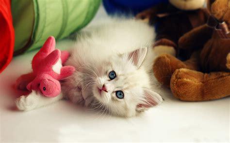 hd wallpaper cute baby cat wallnen  imgstockscom
