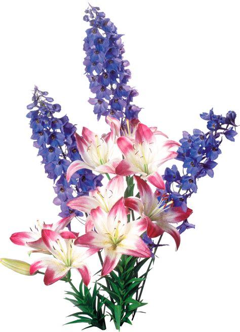 imagenes png de flores 174 gifs y fondos paz enla tormenta 174 im 193 genes de flores