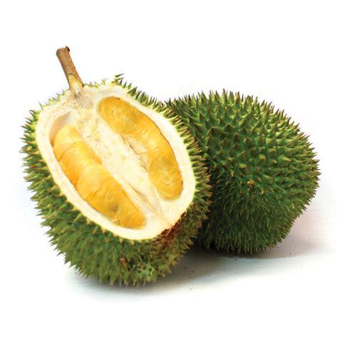 Bibit Durian Musang King 2017 jual bibit durian musang king asli dengan pelayanan