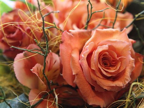 images of love rose flowers love rose flowers flower hd wallpapers images pictures