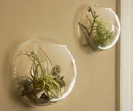 Decorative Wall Sconces For Plants decorative wall sconces for plants ideas home interior exterior