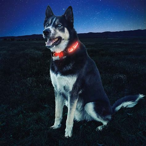glowing collar nite dawg led light up collar