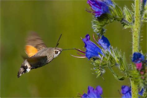colibri bird pixdaus