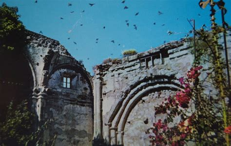 mission san juan capistrano courts cliff swallows hopes