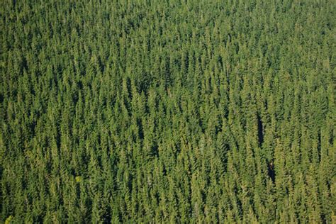 texture pattern forest forest pattern free stock photo public domain pictures