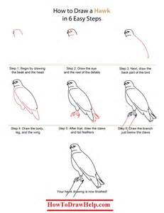 how to draw a hawk step by step tutorial drawing