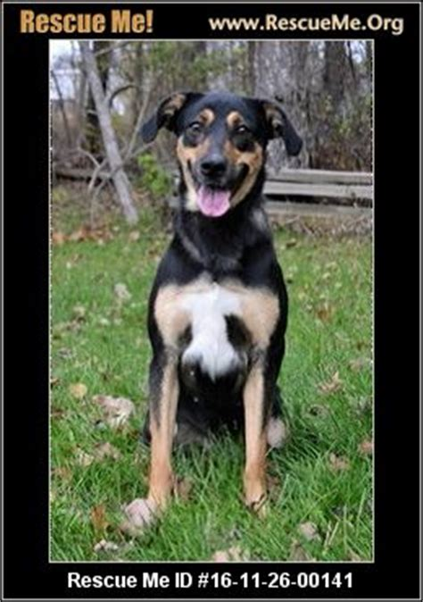 rottweiler rescue idaho indiana rottweiler rescue adoptions rescueme org