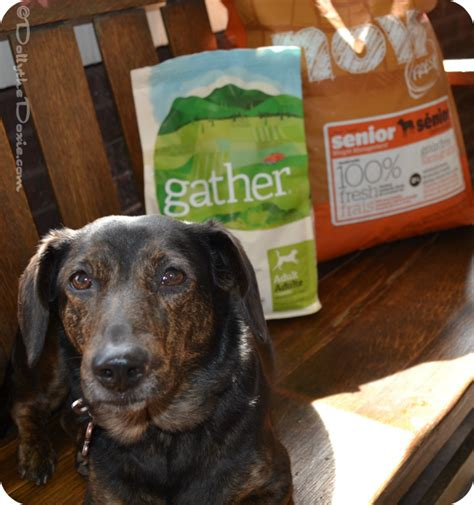 vegan diet for dogs dolly goes vegan is a vegan diet for dogs right for yours ad