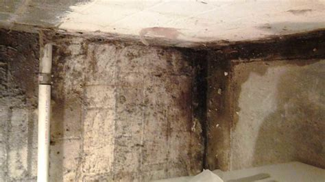 basement waterproofing quality st waterproofing rescues