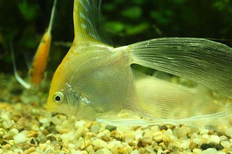 Boneka Ikan Nemo Fish Jumbo Besar gambar ikan lucu sobat ngakak