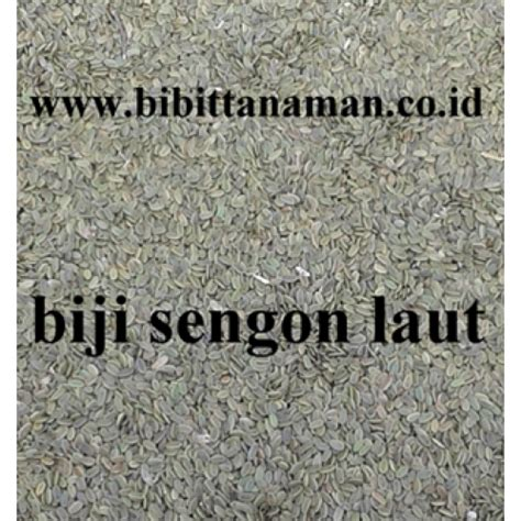 Bibit Sengon Laut Murah jual bibit tanaman unggul murah di purworejo