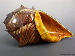 conch color conch shell rosetree blown glass