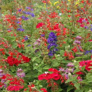 hummingbird wildflower seed mix 1 lb 2bseeds