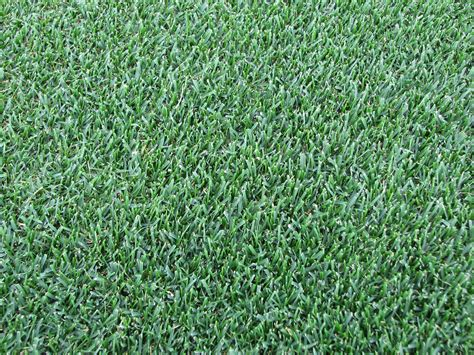 the 6 best types of grass to plant in your cincinnati lawn lawnstarter