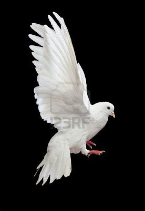 dive dove dived 464 best holy spirit images on
