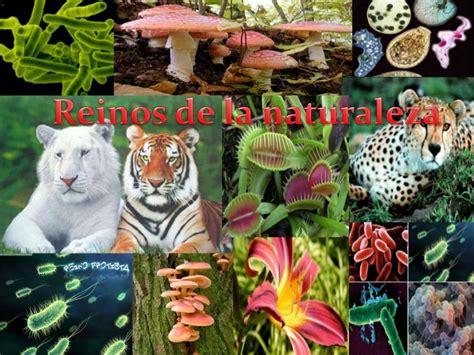 imagenes sorprendentes de animales extraños reino animal