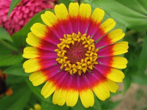 piante per terrazzi fiori per terrazzi piante da terrazzo scegliere i