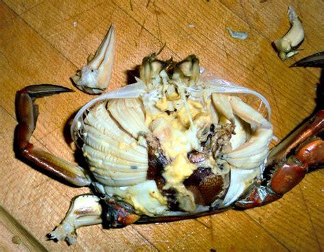 accidental rvers janes island state park  crabbing   chesapeake bay