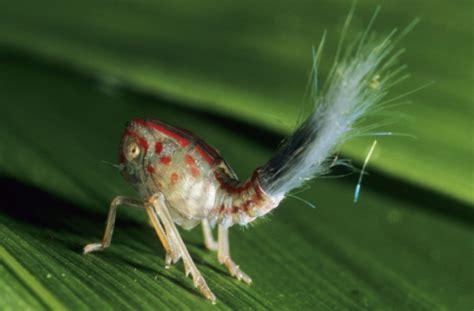 insetto nero volante cavallette grilli co mangiare gli insetti in europa