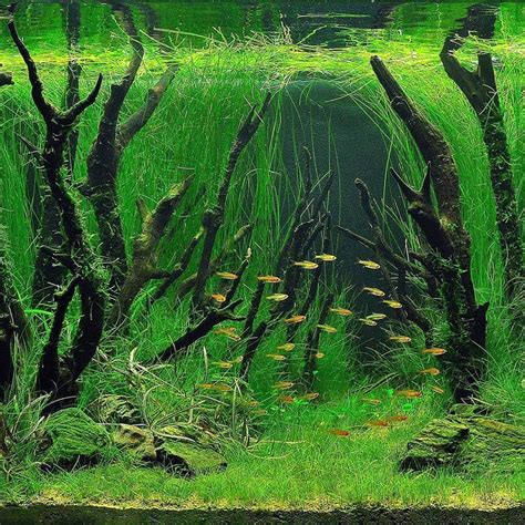 freshwater aquascaping 25 best freshwater aquarium ideas on pinterest aquarium ideas freshwater fish for