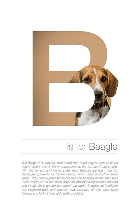 breeds alphabetical designer creates adorable alphabetical series of breeds from a to z