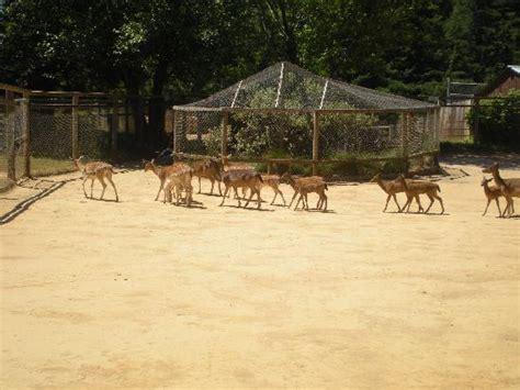 deer picture of west coast game park safari bandon