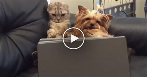 do dogs get bored when this cat and get bored you ve gotta see what they do oh my