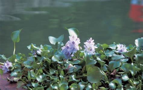 piante primaverili fiorite fioriture primaverili pagina 2 di 9 pollicegreen