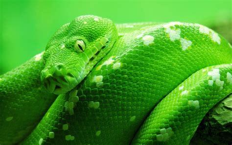 anaconda wallpaper snake wallpapers best wallpapers
