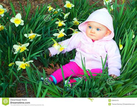 spring baby  daffodils royalty  stock image image