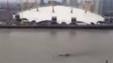 thames river monster mysterious creature spotted swimming in the river thames
