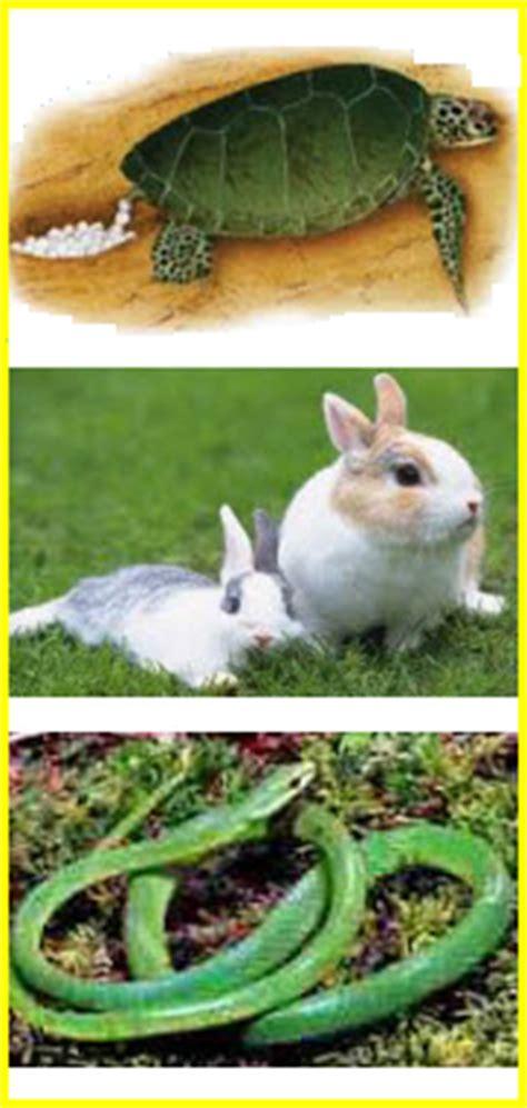 penggolongan hewan ipa kumpulan soal ujian terbaru