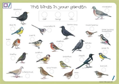 garden guru feed the birds prickett ellis estate agents