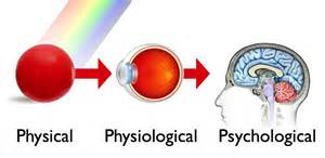 what part of the eye sees color psychology dot color