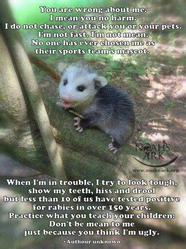 Possum Memes - 19 best images about possum love on pinterest seasons