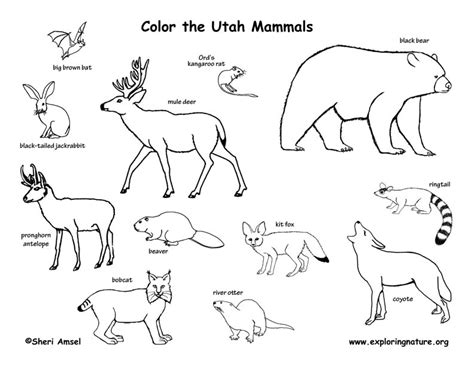 coloring pages utah utah